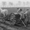 1950. Vetés lóval