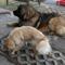 kutyáink 5