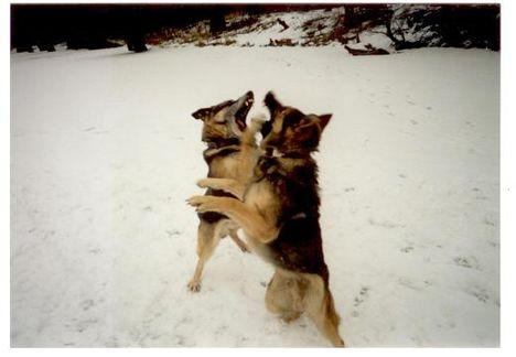 kutyáink 7