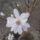 Cs.Marcsi virágai