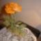 harisnya virágaim 005