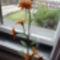 harisnya virágaim 008