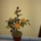 harisnya virágaim 012
