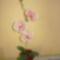 harisnya virágaim 019