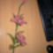 harisnya virágaim 021