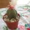 kaktusz 001