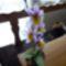 lila orhidea
