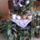 Orhideaim-004_1436267_9831_t