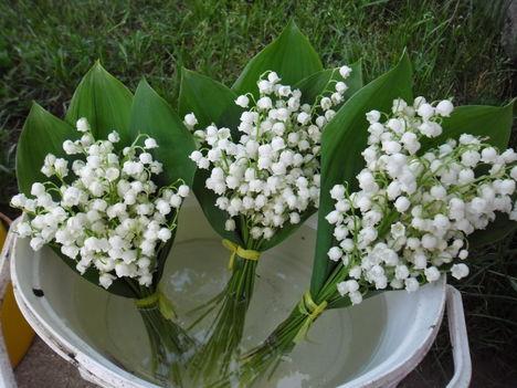 Gyöngyvirág! 1
