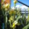A tavaly átültetett virágok is megeredtek.