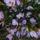 Ódorné Gyöngyi virágai