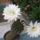 Kaktuszom_1043322_3423_t