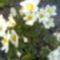 Kép4610
