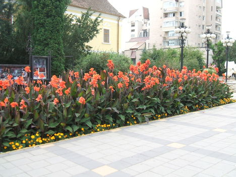 Marosvásárhely , Virágok