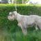 Molly 4