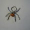 első pókom