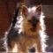 A kis terrier..Pufy