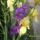 2012 Kerti virágok