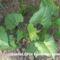 Kerti növények május 15 3