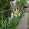 Tavaszi virágok 2012 006