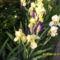 Tavaszi virágok 2012 008