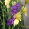 Tavaszi virágok 2012 009