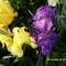 Tavaszi virágok 2012 010