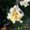Tavaszi virágok 2012 012