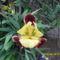 Tavaszi virágok 2012 014