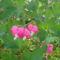 Tavaszi virágok 2012 015