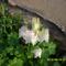 Tavaszi virágok 2012 017