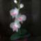 Orchideám