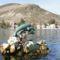 Kastelorizo Island Dolphins