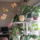 Orchideak_1446151_7322_t