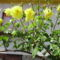 bánfalvi virágok