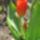 Demeter Gyöngyi  -  kertemből