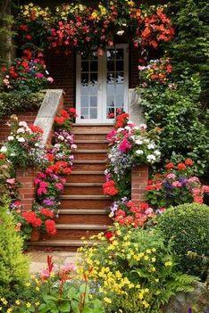 gyönyörű virágok 1