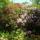 Jeli_arboretum-001_1448919_2437_t