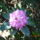 Jeli_arboretum-002_1448920_8569_t