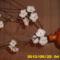 vegyes 065 harisnya virágok.