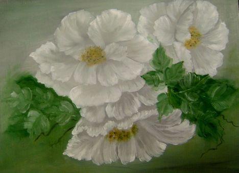 Fehér rózsék