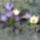 Ildikó virágai