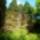 Jeli arborétumban készítettem a fotókat(2012. máj. 09-Edittől