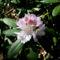 Jeli arbóritumban egy nagy séta 11