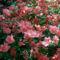 Jeli arbóritumban egy nagy séta 14