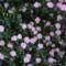 Jeli arbóritumban egy nagy séta 15