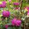 Jeli arbóritumban egy nagy séta 19