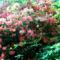 Jeli arbóritumban egy nagy séta 2