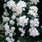 Jeli arbóritumban egy nagy séta 4