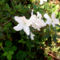 Jeli arbóritumban egy nagy séta 6